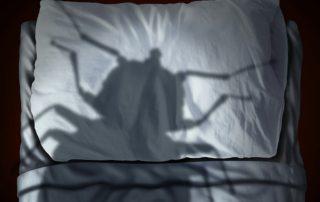 Les risques de la punaise de lit pour l'homme