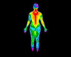 attirance punaise de lit chaleur corporelle