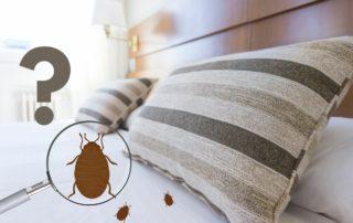 trouver nid punaises de lit