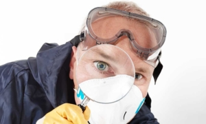 inspection du logement detection punaises