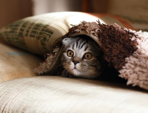 Tout savoir sur les punaises de lit et animaux domestiques